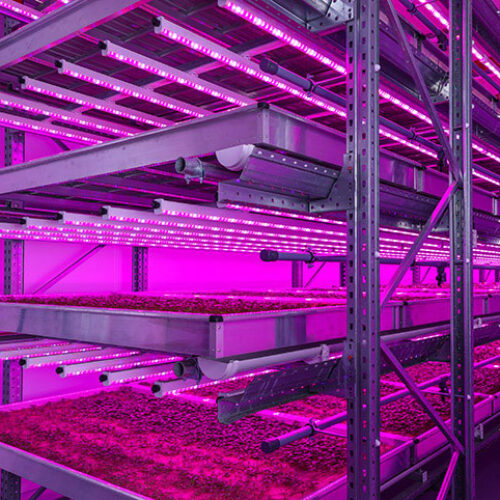 LED Solutions for Food, Farming, and Missions to Mars